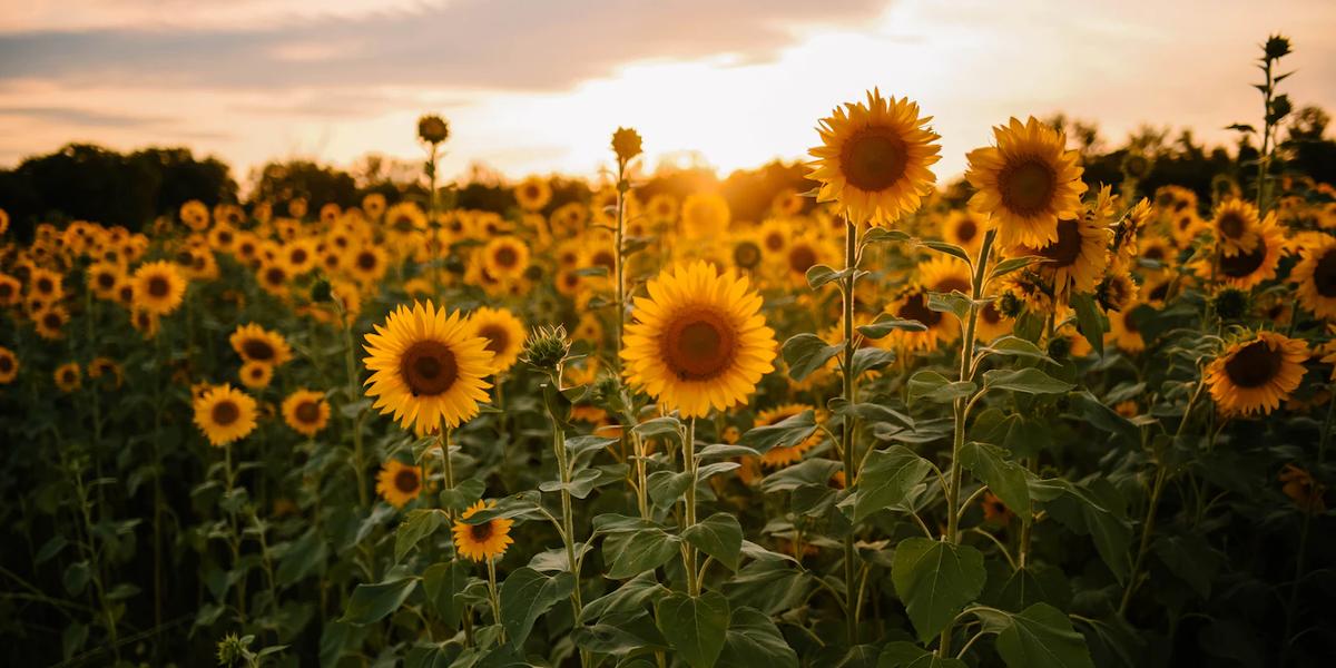 Le Solstice d'été : Le sabbat de Litha