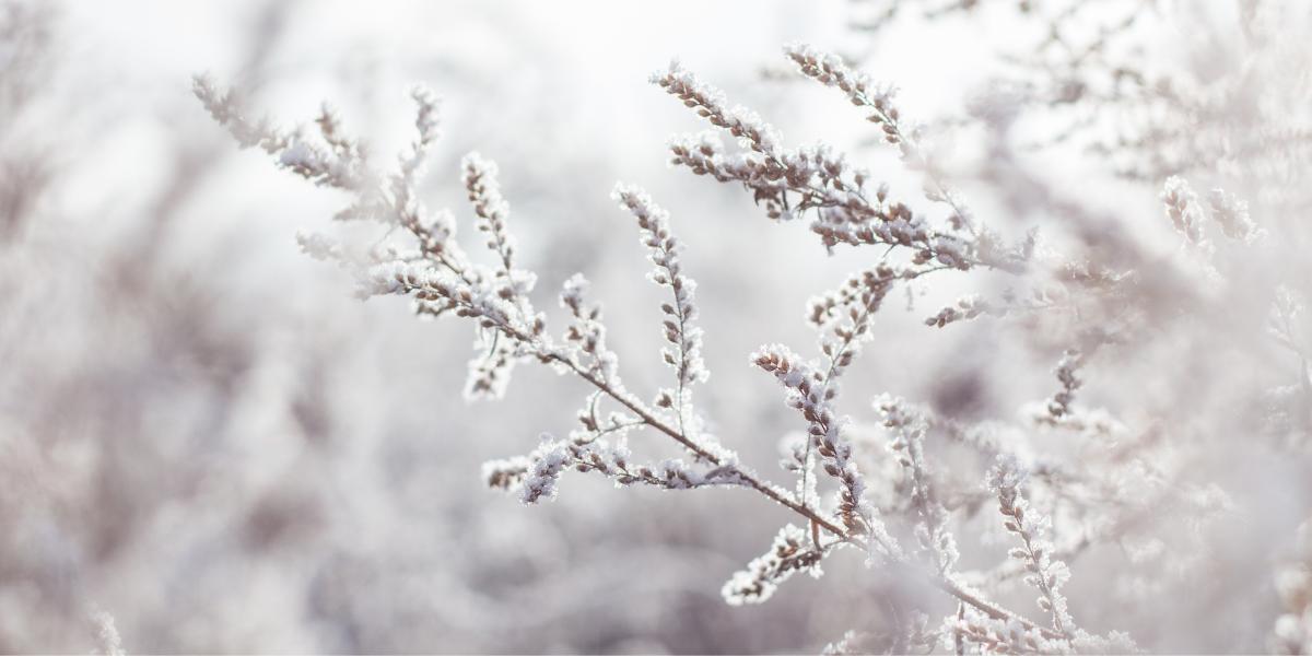Le Solstice d'hiver : Le sabbat de Yule
